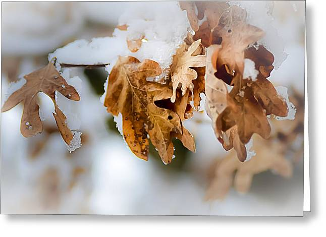 Julie Palencia Greeting Cards - Winter Leaves Greeting Card by Julie Palencia