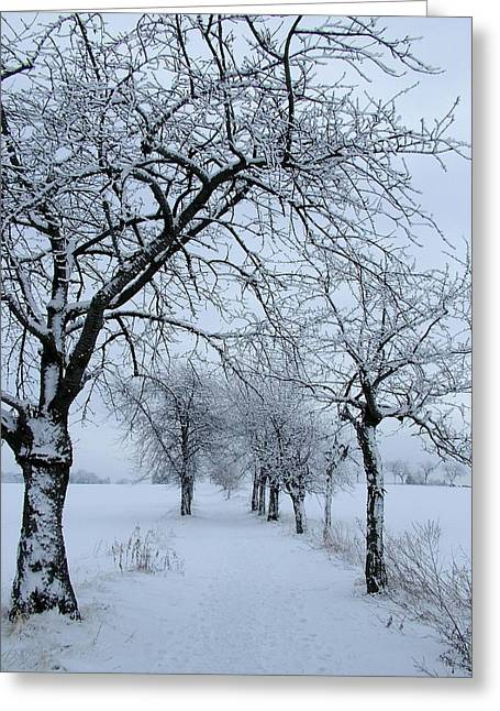 Snow-covered Landscape Greeting Cards - Winter Greeting Card by Mountain Dreams