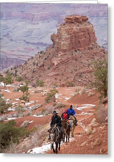 Winter Mule Train In The Grand Canyon Greeting Card by Jim West