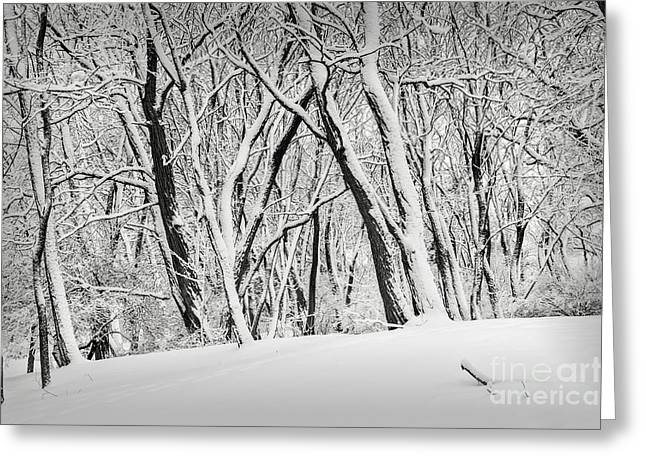 Winter Park Landscape Greeting Card by Elena Elisseeva