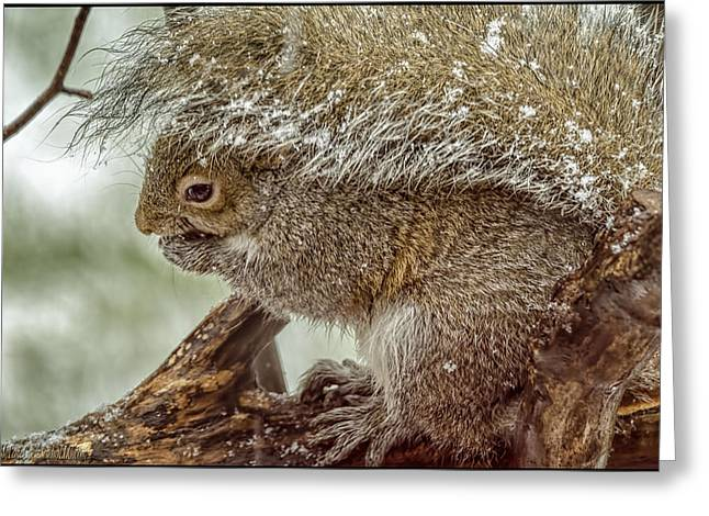 Wild Orchards Greeting Cards - Winter Squirrel Greeting Card by LeeAnn McLaneGoetz McLaneGoetzStudioLLCcom