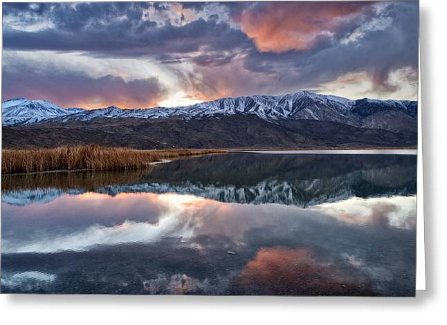 Winter Sunset Greeting Cards - Winter Sunset Greeting Card by Cat Connor