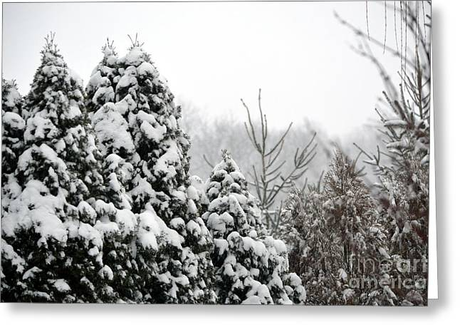 Winter Greeting Cards - Winter Trees Greeting Card by Alys Caviness-Gober