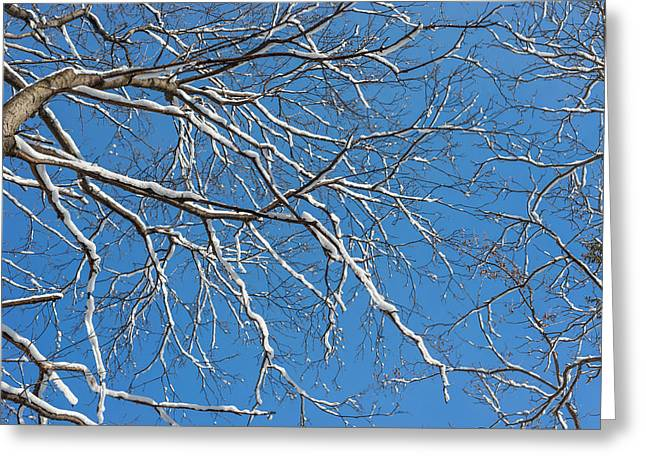 Concept Photographs Greeting Cards - Winter Trees And Blue Sky Greeting Card by Dobromir Dobrinov
