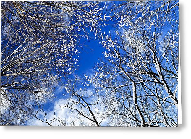 Snowy Tree Greeting Cards - Winter trees and blue sky Greeting Card by Elena Elisseeva