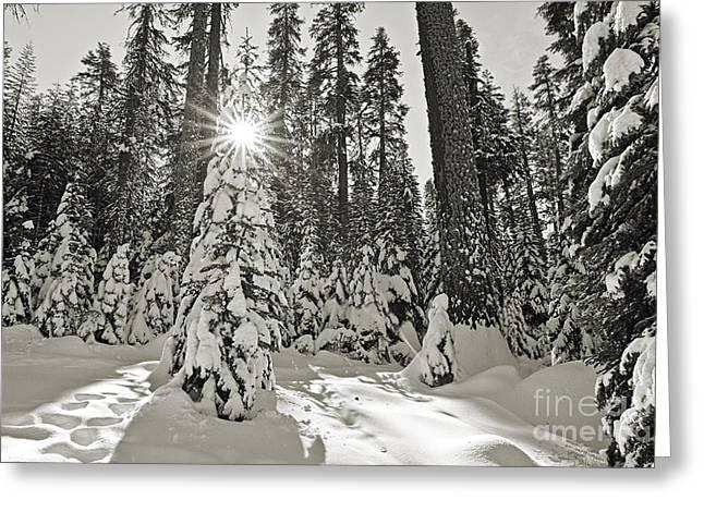 Snowstorm Greeting Cards - Winter Wonderland - Badger Pass in Yosemite National Park Greeting Card by Jamie Pham