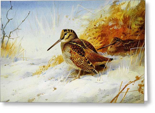 Nature Scene Paintings Greeting Cards - Winter Woodcock  Greeting Card by Archibald Thorburn