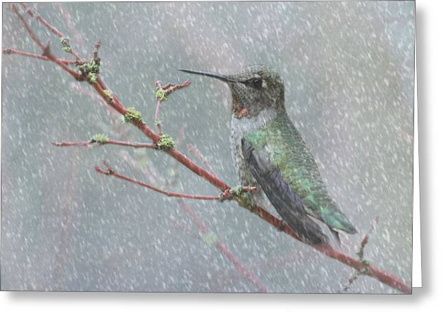 Winter Storm Greeting Cards - Wintering Hummingbird Greeting Card by Angie Vogel