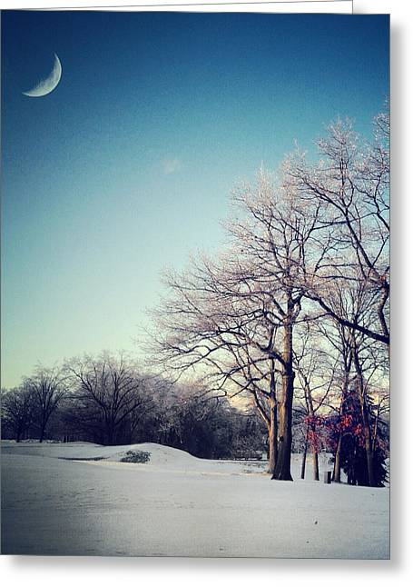 Bare Trees Greeting Cards - Winters Eden Greeting Card by Natasha Marco