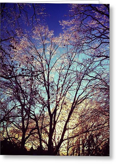 Bare Trees Digital Greeting Cards - Winters Warmth Greeting Card by Natasha Marco