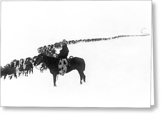 Wintertime Cattle Drive Greeting Card by Charles Belden