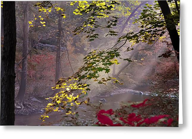 Leaf Change Greeting Cards - Wissahickon Autumn Greeting Card by Bill Cannon