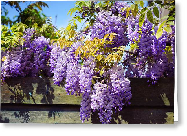 Wisteria Leaves Greeting Cards - Wisteria Garden 8 Greeting Card by Jenny Rainbow