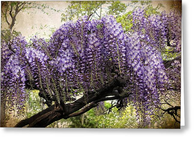 Wisteria Leaves Greeting Cards - Wisteria in Bloom Greeting Card by Jessica Jenney