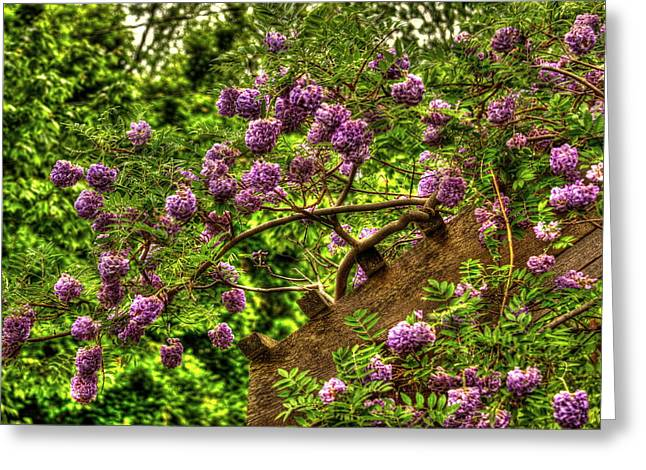 Trellis Greeting Cards - Wisteria Non Invasive Greeting Card by Reid Callaway