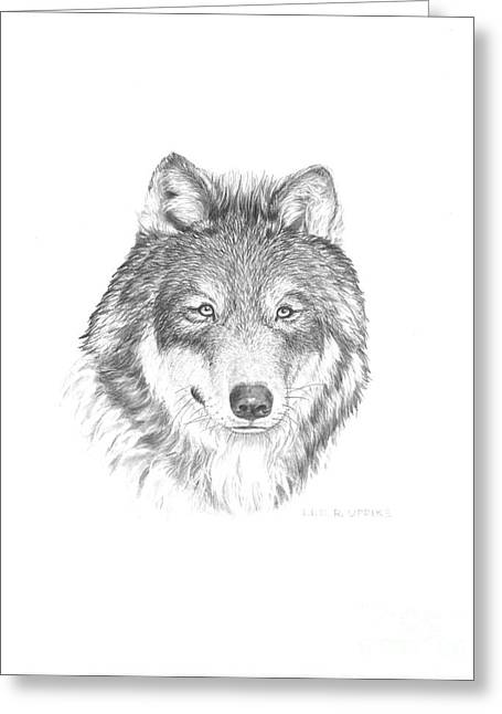 Wildlife Pictures Greeting Cards - Wolf-1 Greeting Card by Lee Updike