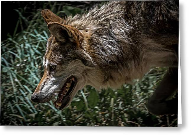 Wolf Portrait Greeting Cards - Wolf Greeting Card by Ernie Echols