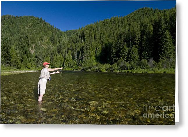 Kelly Photographs Greeting Cards - Woman Fly Fishing, Kelly Creek Greeting Card by William H. Mullins