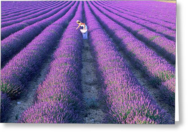 Women Only Greeting Cards - Woman Walking Through Fields Greeting Card by Panoramic Images