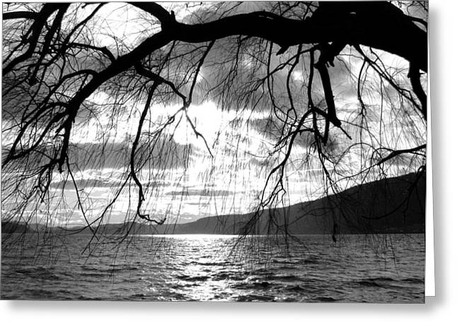Weeping Greeting Cards - Wood Lake Sunset Greeting Card by Will Borden