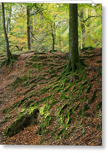 Dappled Light Greeting Cards - Woodbury Castle woods Greeting Card by Pete Hemington