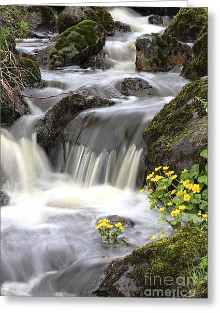 Moist Greeting Cards - Woodland Stream Rapids Greeting Card by Bjorn Svensson