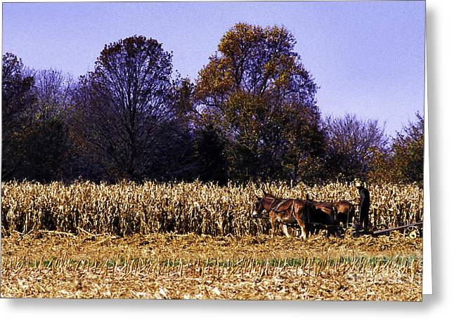 Amish Digital Art Greeting Cards - Working the Fields Greeting Card by Thomas R Fletcher