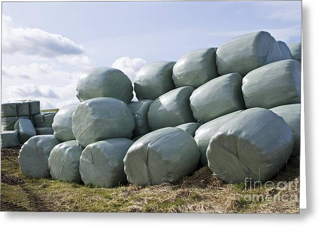 Hay Bales Greeting Cards - Wrapped Hay Bales Greeting Card by Mark Williamson