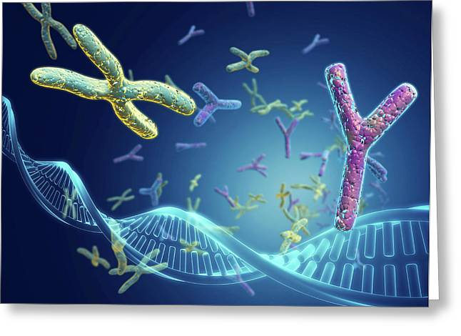 X And Y Chromosomes Greeting Card by Harvinder Singh