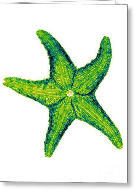 Radial Symmetry Greeting Cards - X-ray Of Starfish Greeting Card by Bert Myers