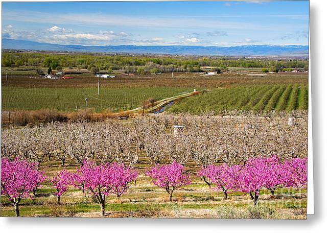 Height Greeting Cards - Yakima Valley Spring Greeting Card by Mike  Dawson