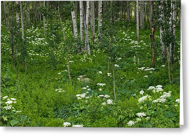 Crested Butte Greeting Cards - Yarrow And Aspen Trees Along Gothic Greeting Card by Panoramic Images