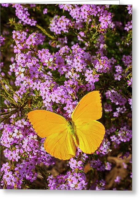 Gorgeous Flowers Greeting Cards - Yellow Butterfly On pink Flowers Greeting Card by Garry Gay