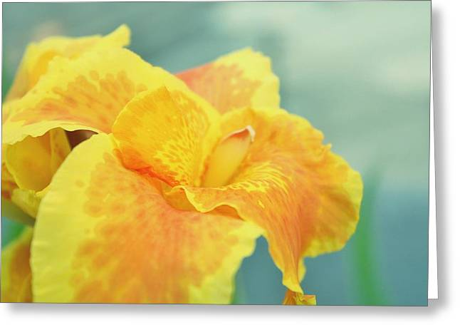 Northwest Flowers Greeting Cards - Yellow Iris Greeting Card by Cathie Tyler