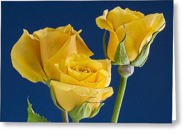 Barbara Smith Greeting Cards - Yellow Roses Greeting Card by Barbara Smith