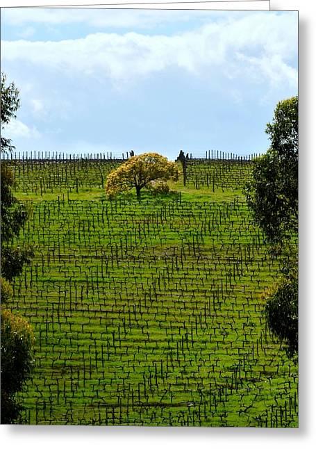 Stellenbosch Greeting Cards - Yellow Tree Greeting Card by Werner Lehmann