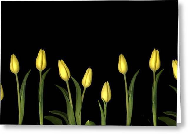 Botany Greeting Cards - Yellow Tulips Greeting Card by Jacqui Martin