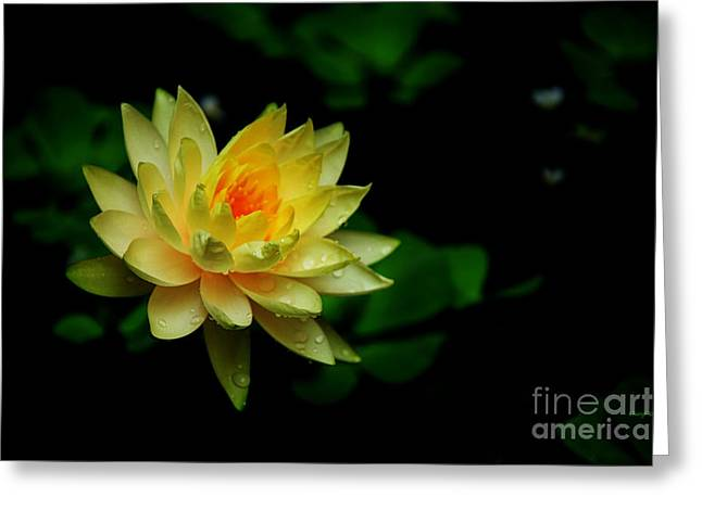 Reception Greeting Cards - Yellow Water Lily Greeting Card by Cheryl Young