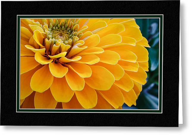 Matting Greeting Cards - Yellow Zinnia Close-Up Greeting Card by Charles Feagans