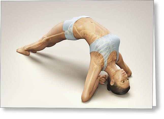 Physical Body Greeting Cards - Yoga Upward Facing Two-foot Staff Pose Greeting Card by Science Picture Co