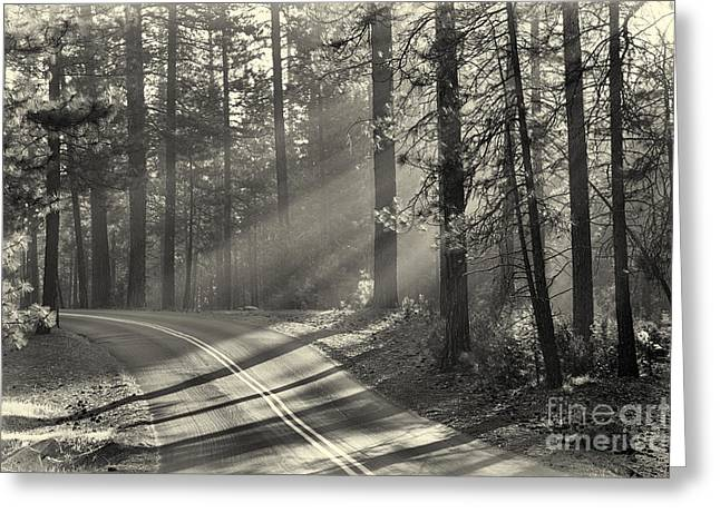 Height Greeting Cards - Yosemite sunlight Greeting Card by Jane Rix
