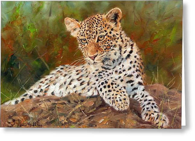 Leopard Print Greeting Cards - Young Leopard Greeting Card by David Stribbling