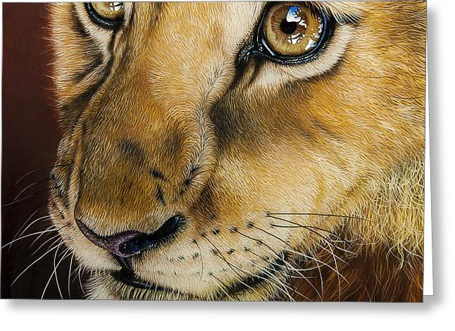 African Lion Art Greeting Cards - Young Lion Greeting Card by Jurek Zamoyski