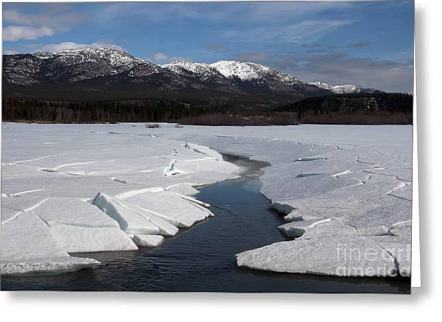 Yukon River Greeting Cards - Yukon River Greeting Card by Mark Newman