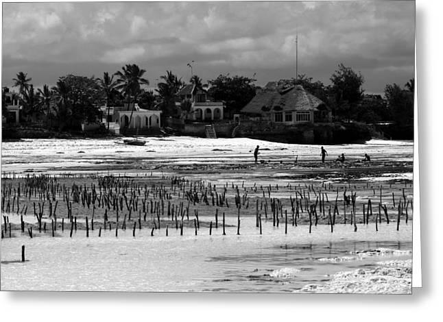 African Huts Greeting Cards - Zanzibar Island  Greeting Card by Aidan Moran
