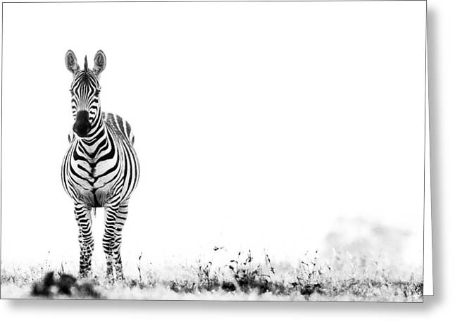 Zebra Facing Forward Washed Out Sky Bw Greeting Card by Mike Gaudaur