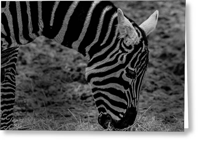 Zoology Greeting Cards - Zebra Stripes Greeting Card by Martin Newman