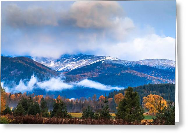 Schweitzer Greeting Cards - 10-27-2014 Greeting Card by Kirk Miller