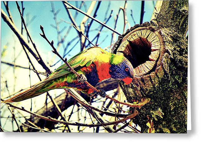 Parrot Pyrography Greeting Cards - Parrot  Greeting Card by Girish J
