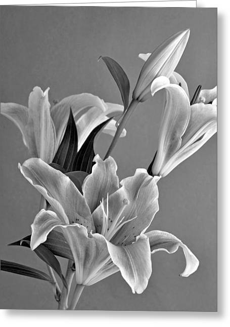 European Greeting Cards - Black and White beauty Greeting Card by George Atsametakis